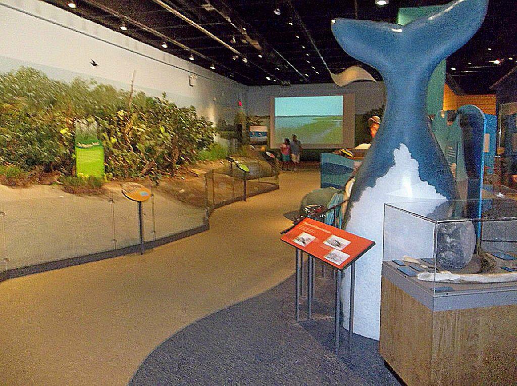 Museum Of Natural History Macon Ga